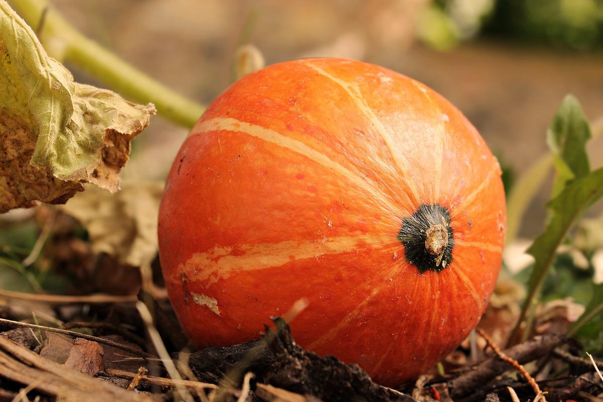 Les légumes de saison en septembre
